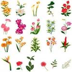 Коллекция Brother Embroidery Card 31 Large Flower Designs II