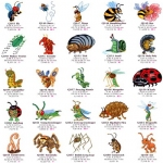 Коллекция Embroidery Oesd Pack 11575 Bugs 2