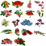 Коллекция Brother Embroidery Card 48 Australian Floral