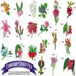 AD1144 Exotic Flowers Collection, Amazing Designs