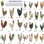 AD1218 Chickens & Roosters Collection I, Amazing Designs